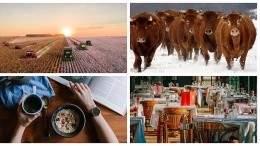 Image for ICYMI: Ricardo Media cancels English-language magazine, Saskatchewan farmer creates wagyu-hybrid, and more