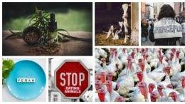 Image for ICYMI: Multiple meat recalls across the country, animal rights protesters in Alberta, and more