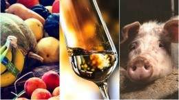 Image for ICYMI: Early draft of Health Canada Food Guide, January vegan challenges gaining traction, Niagara Icewine Festival underway, viral pig disease found in Alberta and more