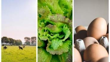 Image for ICYMI: FCL to close Calgary food distribution centre, romaine lettuce linked to E. coli breakout, and more