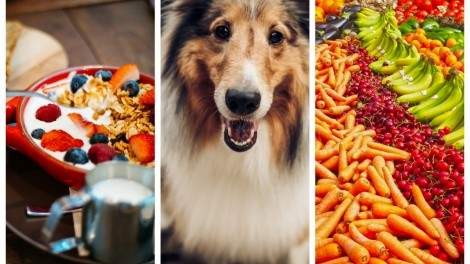 Image for ICYMI: Bannock brunch, cannabis dog food, the new Canadian Food Guide and more