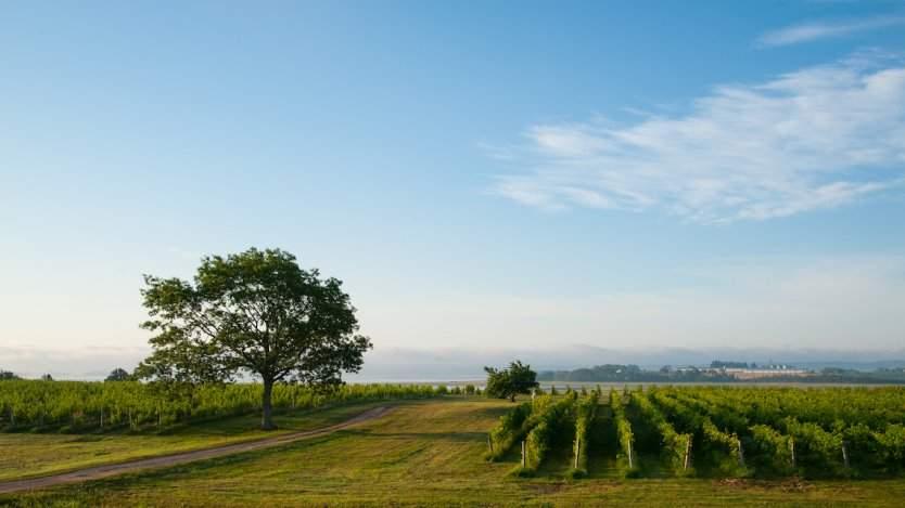 Image for Blomidon Winery