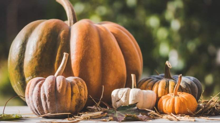 Image for 9 Interesting culinary events to check out across Canada between October 12 and October 20, 2019