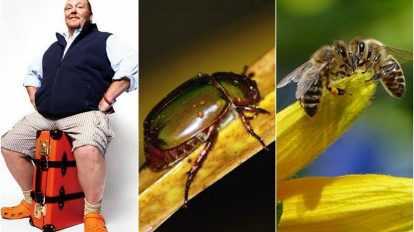 Image for ICYMI: The chew on Batali, battle of the beetles and learning to love dandelions and more