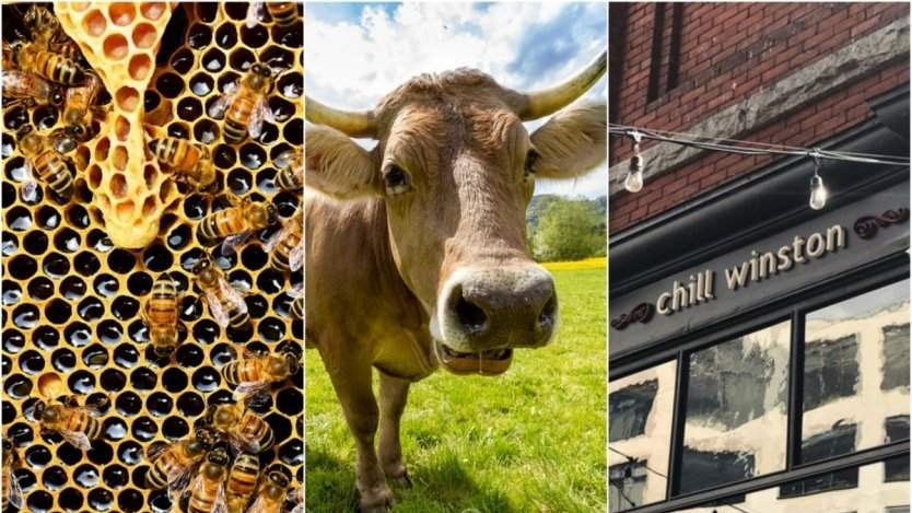 Image for ICYMI: Chill Winston restaurant officially closes this September, Calories Restaurant harnesses beehives on its rooftop and more