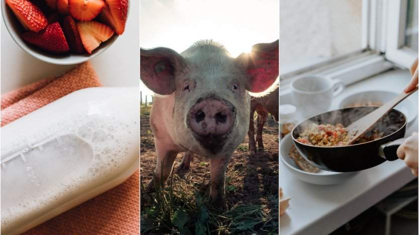 Image for ICYMI: New ultrafitered milk launches in Canada, effects of the African swine fever on Canadian pork products, Regent Park Food culinary workshops and more