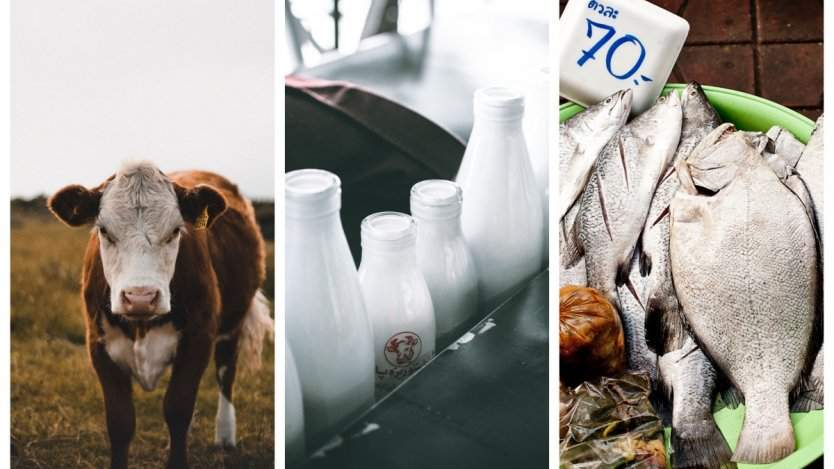 Image for ICYMI: Dairy wars, chocolate milk election issues, seafood fraud and more