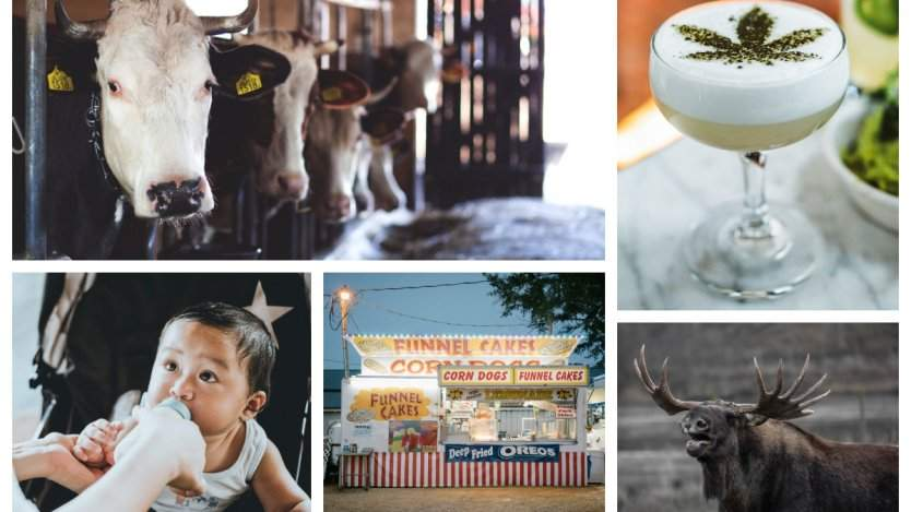 Image for ICYMI: Federal prison farms to reopen in Ontario, Nom Noms debuts in Canada, and more