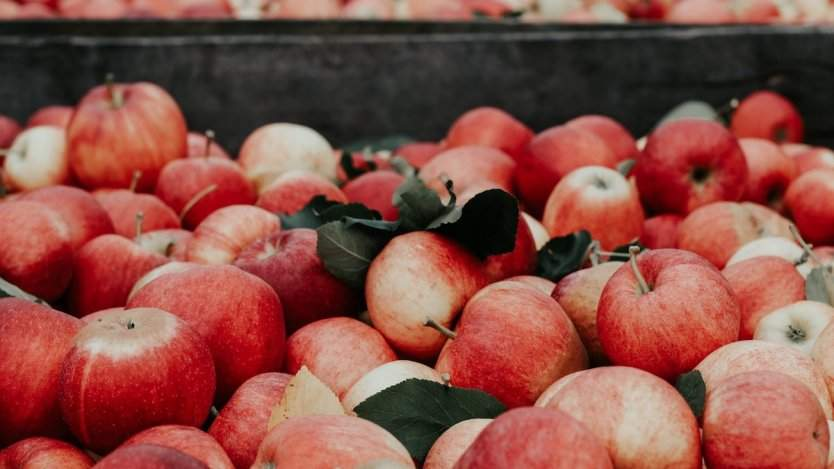 Image for daily bite: Calgarians be a good apple and drop off your fruit for the 2nd annual Uncommon Fruit Drive