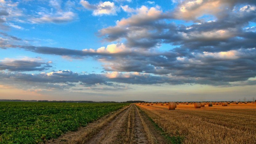 Image for Canadian food DYK: Canada is an agricultural superpower, ranking as the fifth largest agricultural exporter in the world