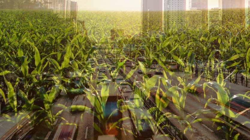 Image for A Richmond farm's century long resilience against rapid urbanization