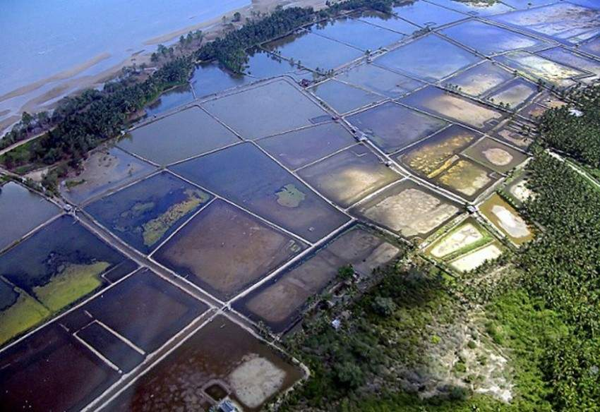 Photo of traditional shrimp ponds by Ellen Hines / Marine Photobank.
