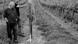 TH Wines cab franc vines. Photo from TH Wines.