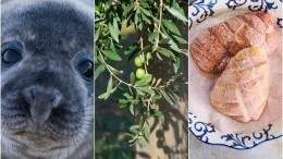 """Image for ICYMI: A couple from B.C. produces 100 percent Canadian olive oil, SeaDNA launches campaign for seal meat consumption and a copyright dispute over the word """"beaver"""" in last week's food news"""