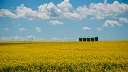 Image for Plant, grow and eat with Canola Eat Well