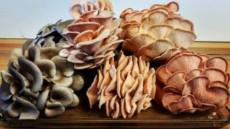 Image for Gruger Market is growing fung-tastic mushrooms