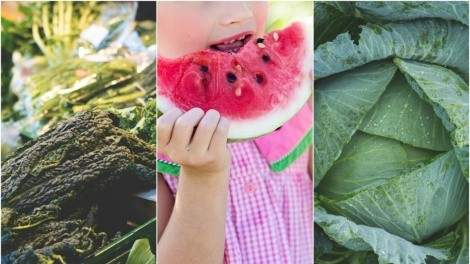 Image for ICYMI: A survey reveals food expenses of Canadian families, P.E.I. volunteers combat food insecurity with cabbage, and nutrition of food at daycares in last week's food news