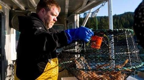 Image for For the love of shrimp: choosing sustainable varieties