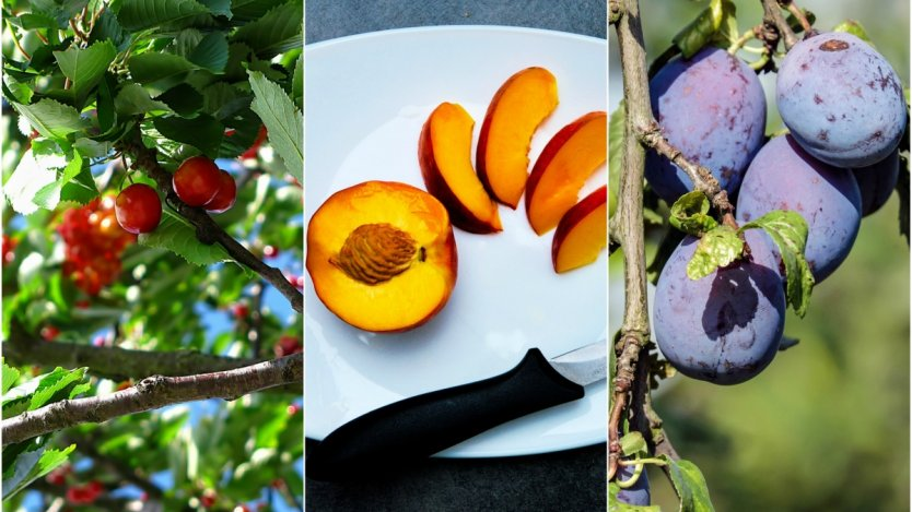Canadian local stone fruits