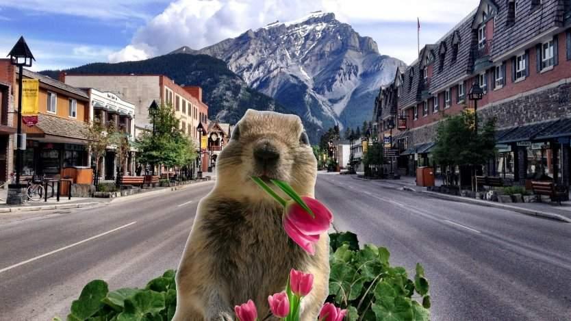 The Banff Squirrel